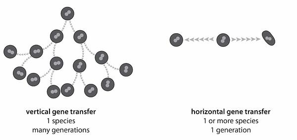 horizontal_and_vertical_gene_transfer