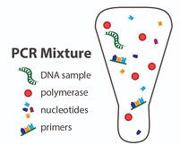 PCR mixture vial-01