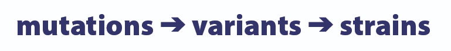 mutations variants strains-01