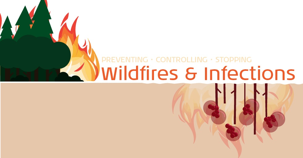 Wildfires-01.jpg